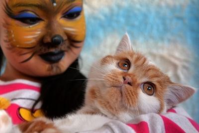 飼い主もネコメーク!キルギスで「ネコ展」開催
