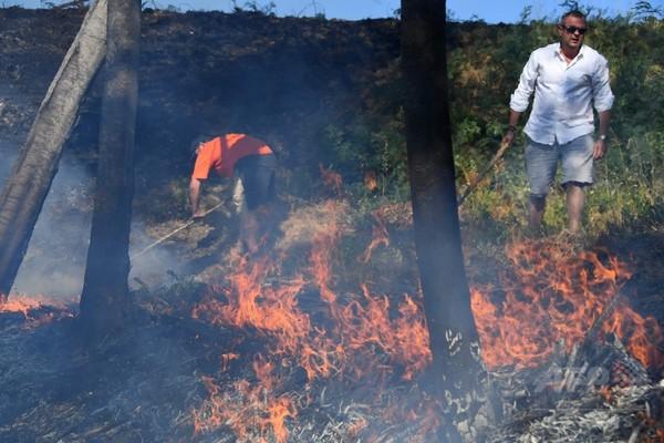 フランス南部森林火災、1万人が避難 EUに支援要請も