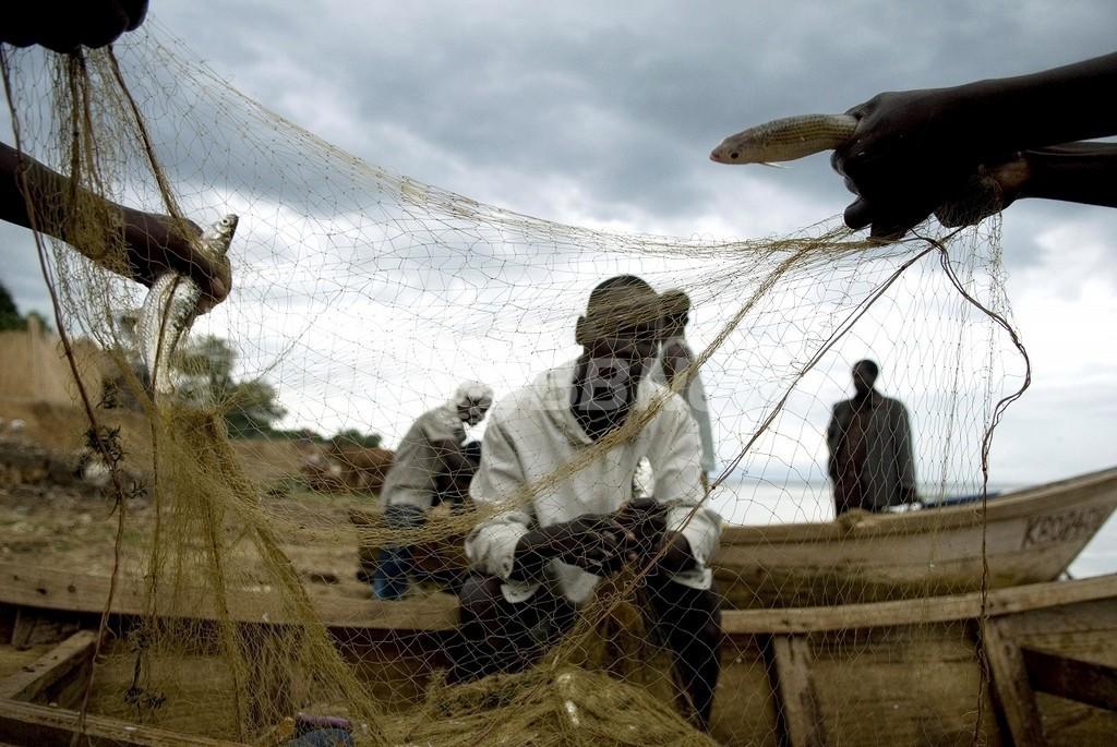 アフリカの淡水種20%以上が絶滅の危機、数百万人に打撃