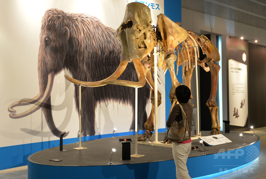 人類、シベリア北極圏に4万5000年前から居住か 露研究
