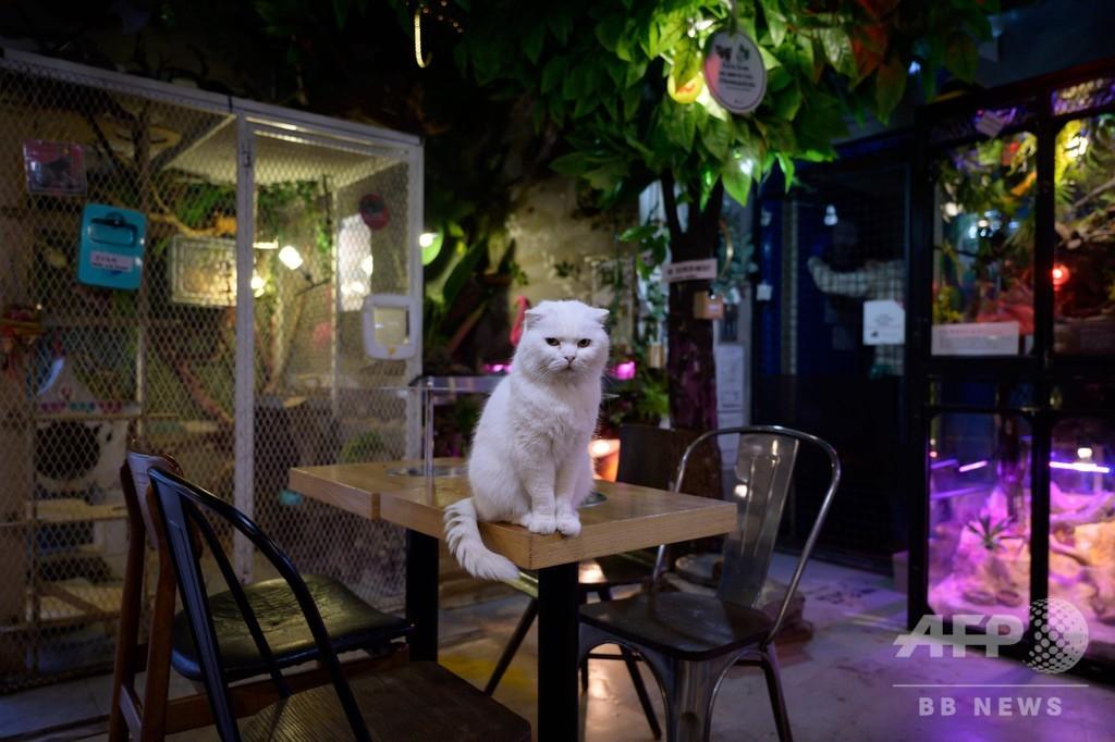 客が来にゃい… 韓国の動物カフェ、新型コロナで閑古鳥
