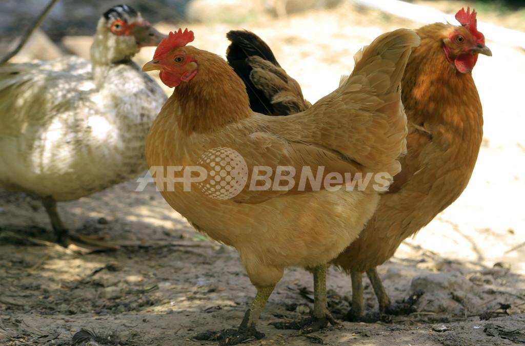 鳥インフル「感染デマ」で12人拘束、上海では回復の報告も