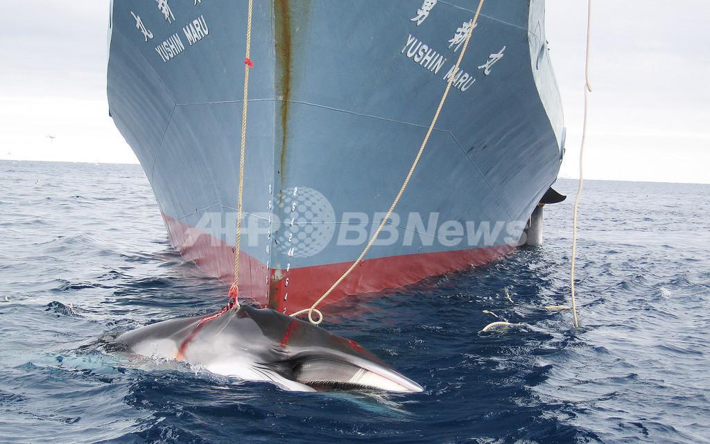 捕鯨問題で「日本はもっと譲歩すべき」、来月退任のホガースIWC議長