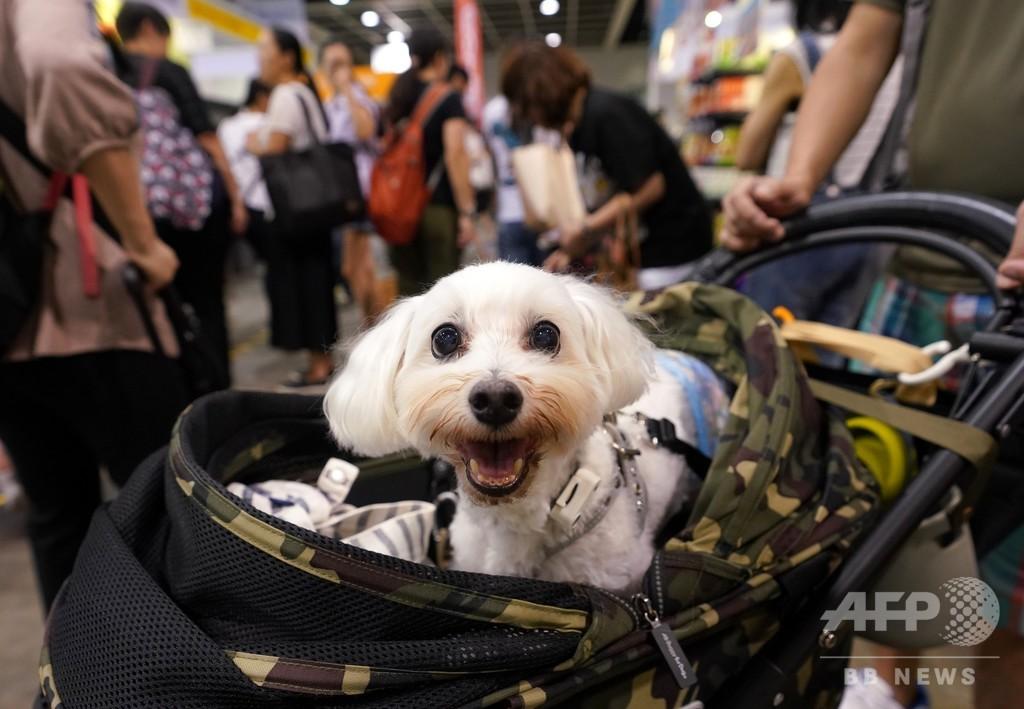 犬の「電子IDカード」 杭州市がマイクロチップ埋め込み無料サービス