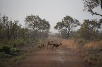 自然保護と観光推進の両立目指す、ベナンのパンジャリ国立公園