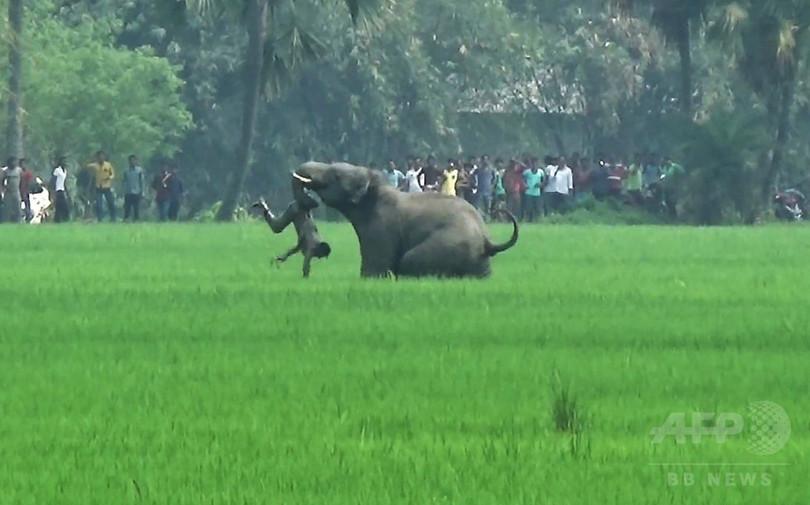 村人襲う野生ゾウ、衝撃的瞬間を撮影 インド