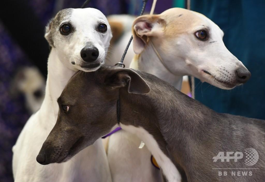 巧みに人を操る「子犬の目」の進化、オオカミにはできない表情 研究