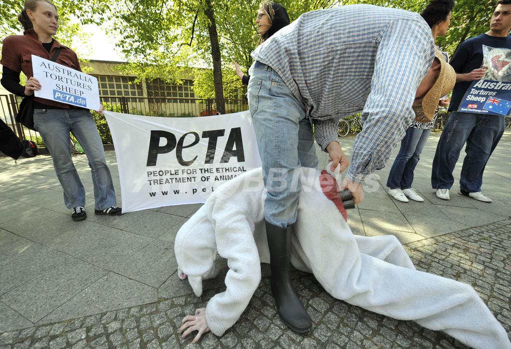 動物愛護団体PETA、今度は「ヒツジのお尻の皮はぎ」に反対