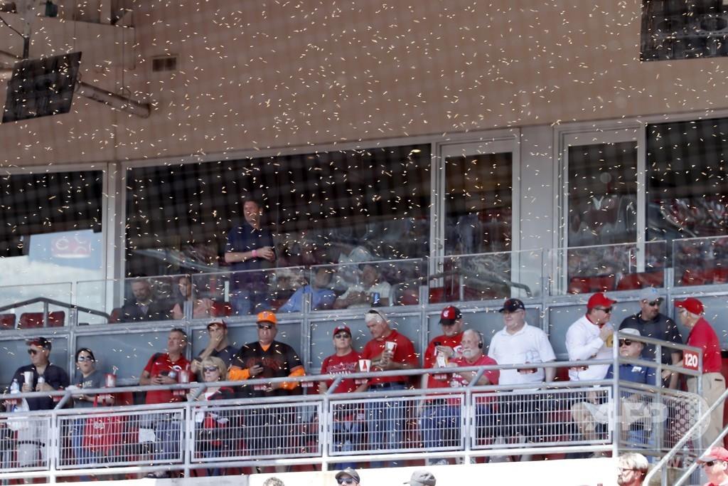 大リーグのスタジアムにハチの大群、試合開始遅れる