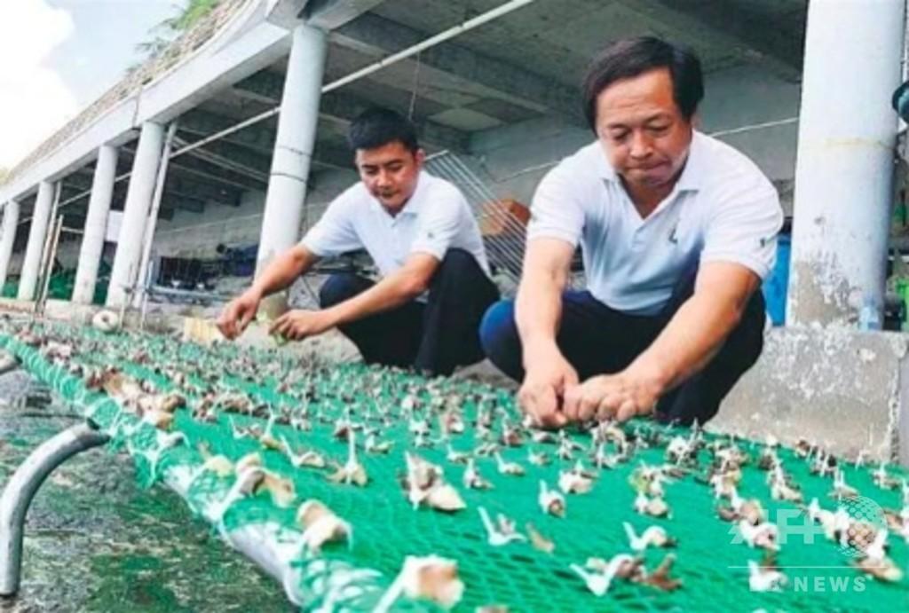 海底にサンゴを植える 中国海南省のサンゴ養殖チーム
