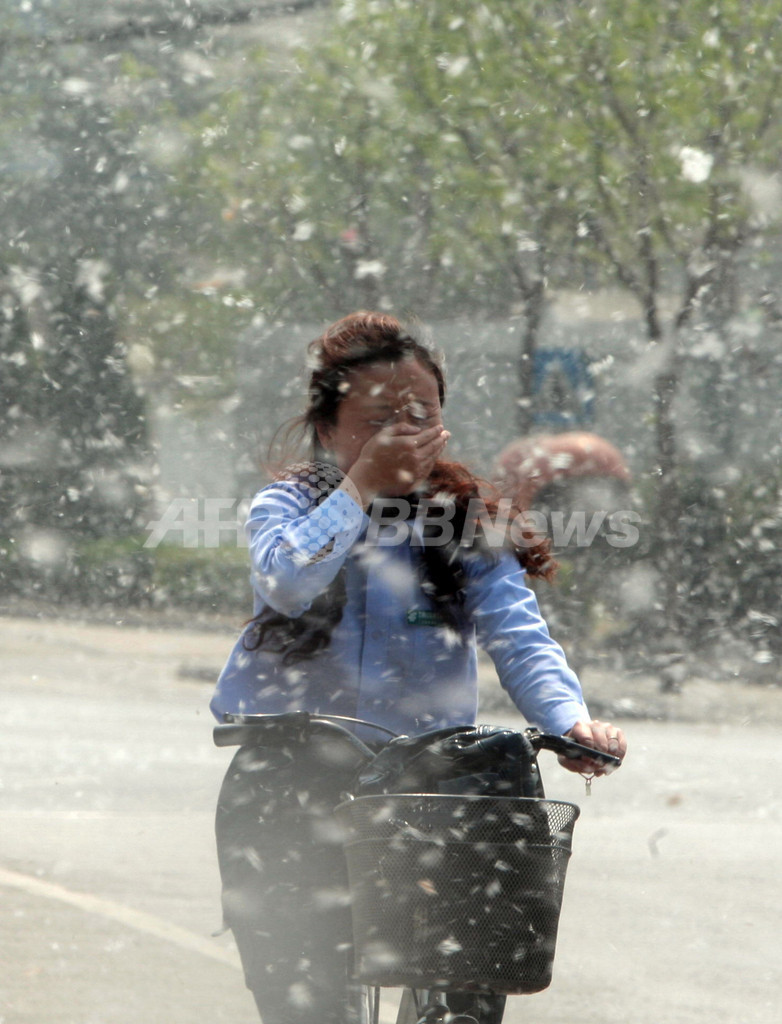 北京市、花粉対策でポプラの「性転換」試みる