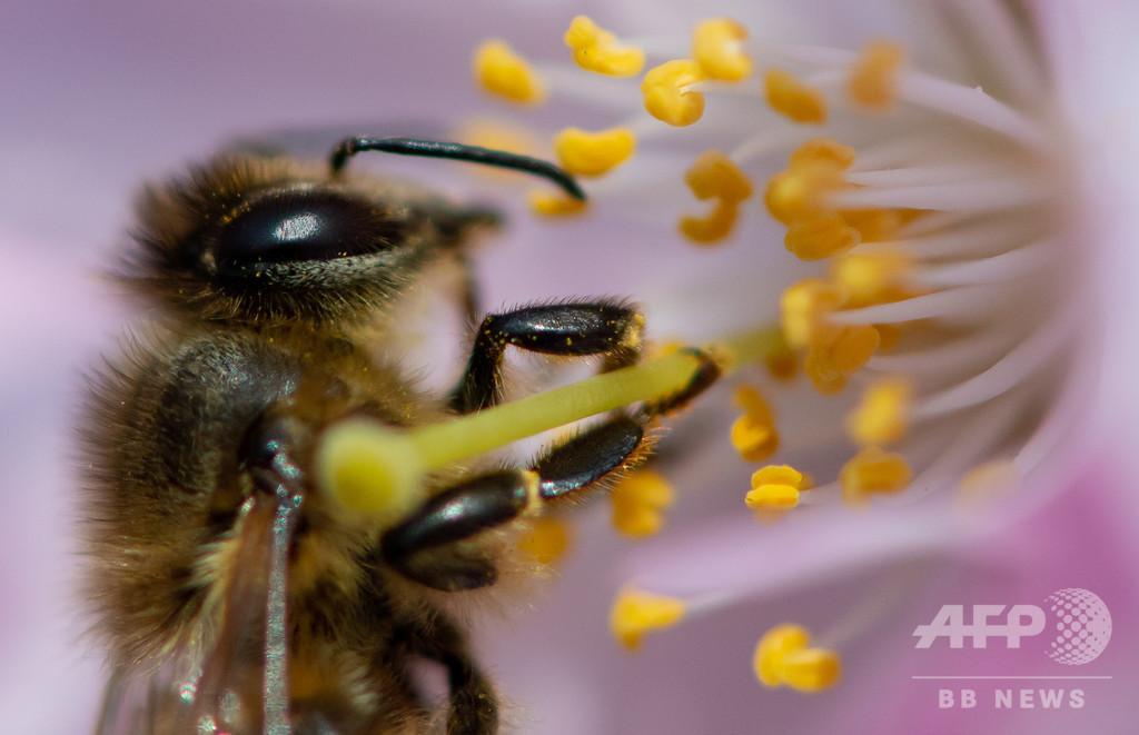 「昆虫保護法」請願に署名175万人、住民投票せず法制化へ 独バイエルン州
