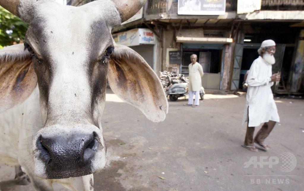 牛飼育していたイスラム教徒2人、リンチされ死亡か 5人逮捕 インド