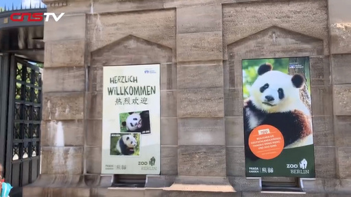 動画:元気だよ! 双子の赤ちゃんパンダ、性別判明後に名前検討 ドイツ