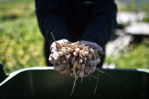 有機農業への完全移行で温室効果ガス排出量は増加 研究
