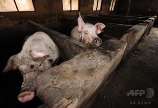 92歳女性に豚小屋での生活強制? 息子夫婦に非難の嵐 中国