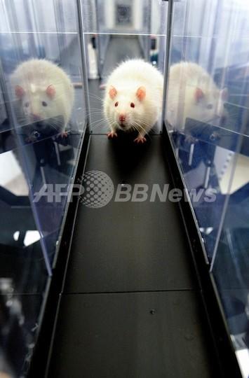 ネズミはとても仲間思いだった、米大研究