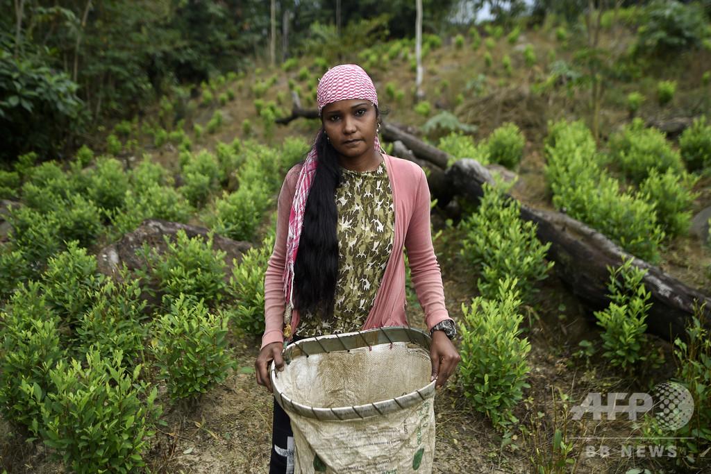 「他に手段はない」…麻薬組織のコカ農園で働くベネズエラ移民 コロンビア【再掲】