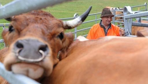 栄養価の高い家畜飼料で気候変動を抑制可能、ケニア研究所