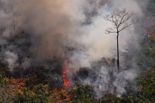 トランプ氏、ブラジル大統領にアマゾン火災対応で支援申し出