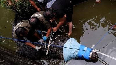 動画:体長4mのペットのワニに襲われた女性が死亡 インドネシア