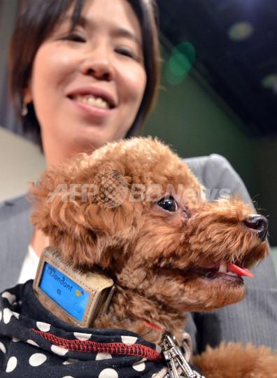 愛犬の健康管理用クラウドサービス、富士通が発表