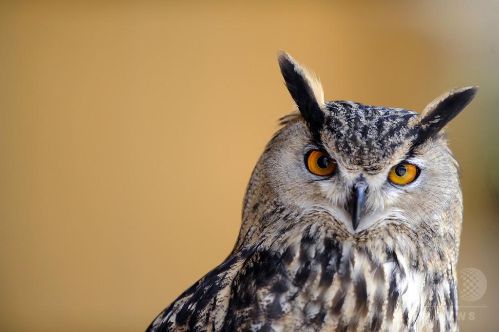 『ハリポタ』出演フクロウの繁殖家に無罪、仏裁判所
