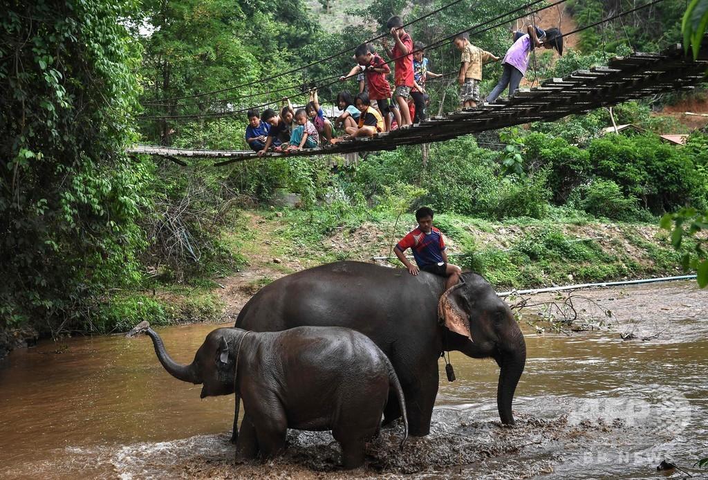 観光地閉鎖でゾウ「里帰り」 餌確保が深刻な課題に タイ