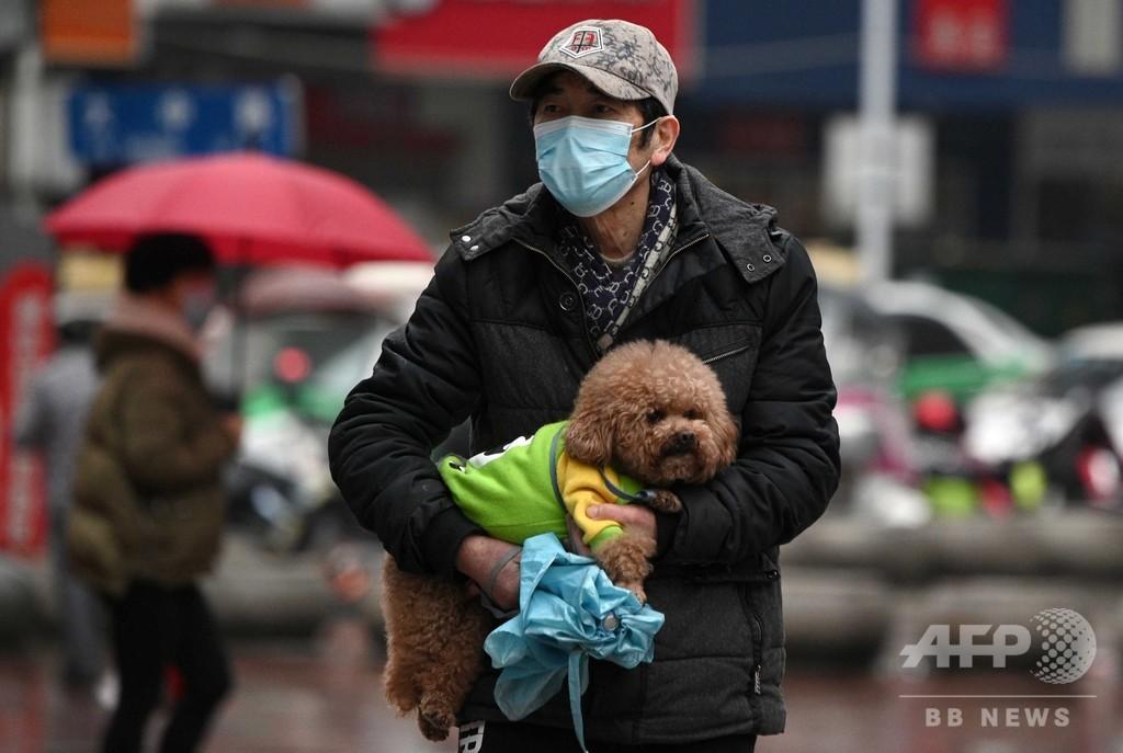 「ペットをなでたら手洗いを」 仏医学団体、感染リスク排除できず