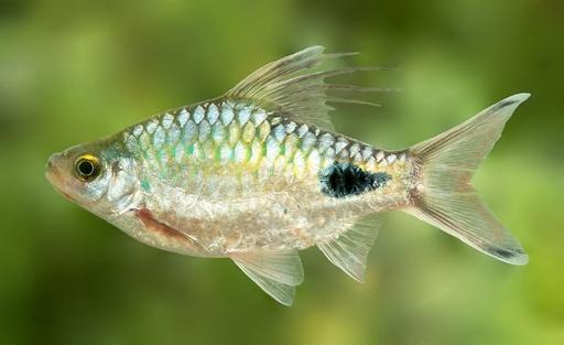 発見前に絶滅する未知の生物説は「杞憂」、国際研究