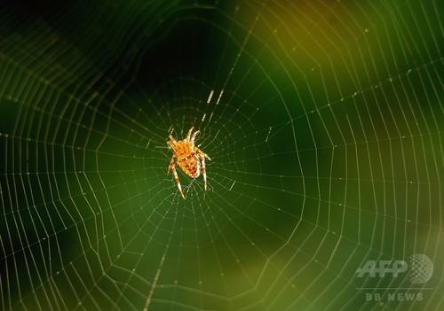 大腸菌から合成「クモの糸」、スウェーデン研究