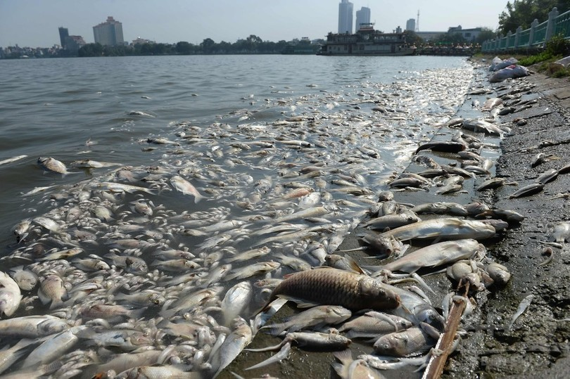 ベトナム・ハノイ最大の湖で魚が大量死、水質汚染か