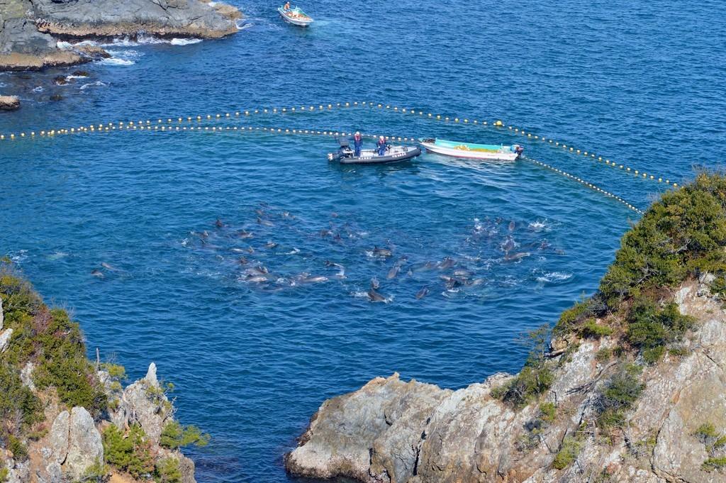 イルカの追い込み漁「湾内に血の帯」と反捕鯨団体