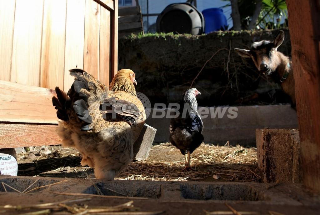 仏産フォアグラなど輸入禁止、鳥インフル発生で
