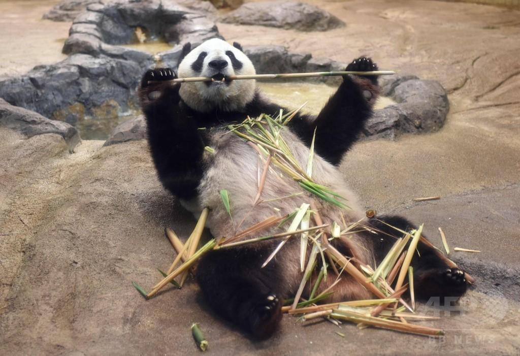 展示中止前日、「シンシン」一目見ようと大勢の来場者 上野動物園