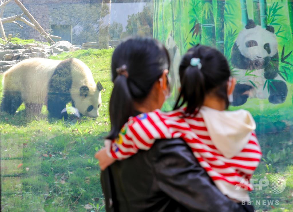 やっと会えたね! 武漢動物園が見学再開、感染対策で制限も 中国