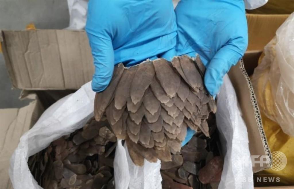 センザンコウ820キロの密輸を取り締まり、中国