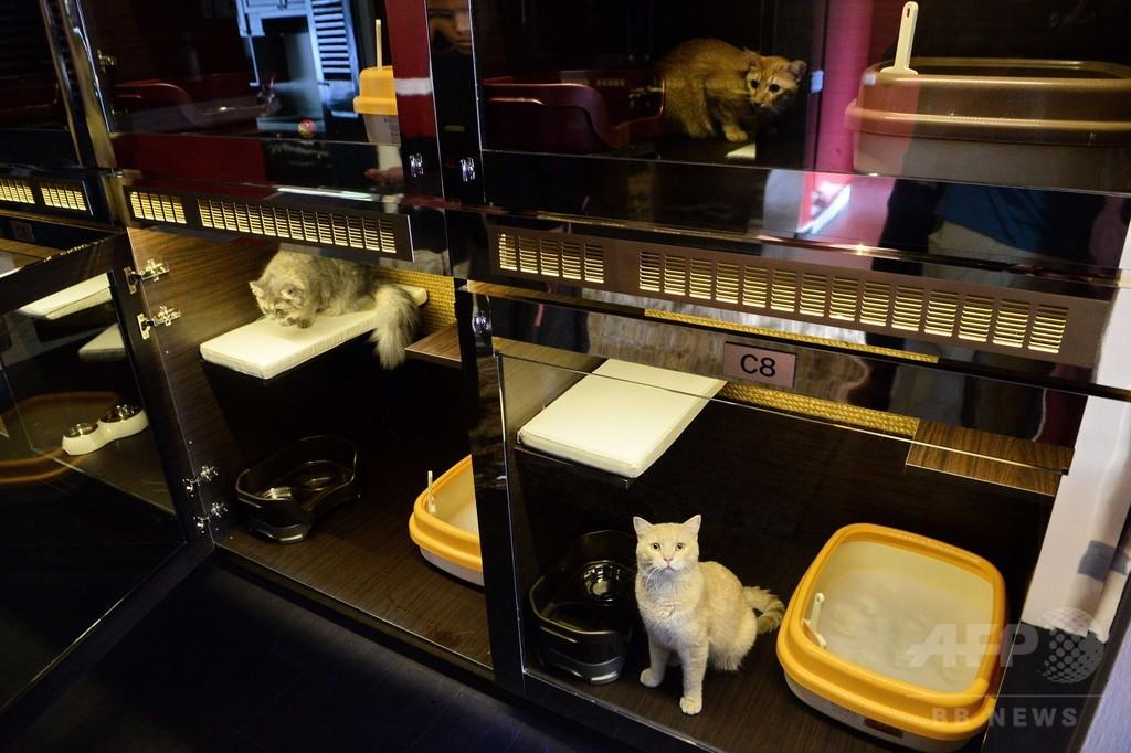 餌皿はスワロ、猫専用の極上ホテルが誕生 シンガポール