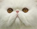 【特集】猫、猫、猫だ