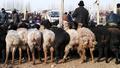 伝統的なバザールに集うカシュガルの人、牛、羊