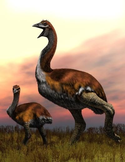 「世界最大の鳥」めぐる論争、ついに決着