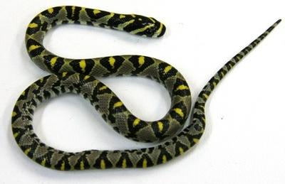 成田行きカンタス機内にヘビ、乗客370人シドニーで一晩足止め