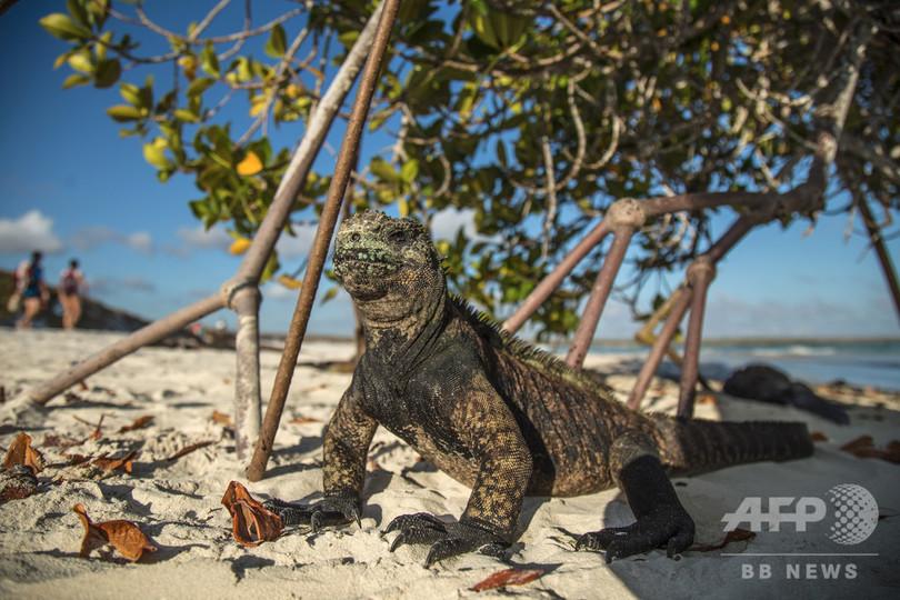 ガラパゴス諸島、新年控え花火禁止に 固有種保護を強化