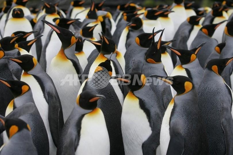 過去最大のペンギンの化石、南極で発見