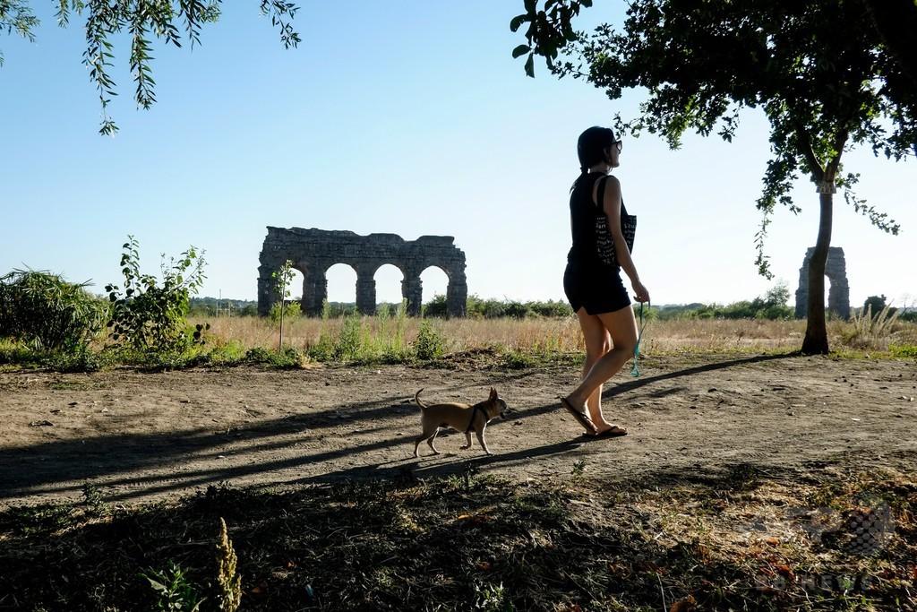 犬の看病に傷病手当、イタリア裁判所が認める 「ペットは家族」