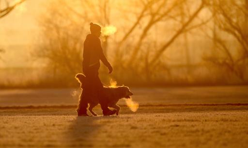 ノルウェーで犬に謎の病気、推計200匹発症か 25匹死ぬ