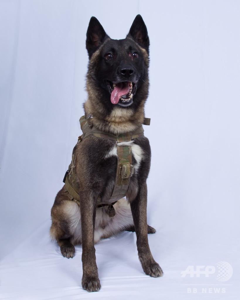 IS指導者急襲作戦の「英雄犬」、ホワイトハウスで歓迎へ トランプ氏