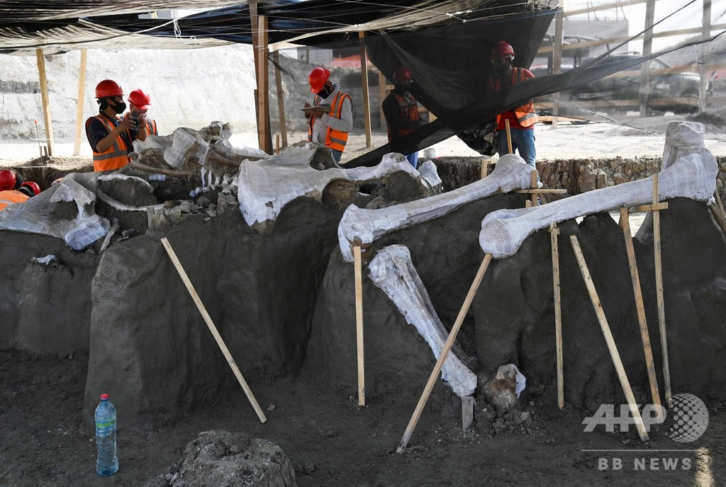 新空港建設現場から「マンモスの墓場」出土 メキシコ