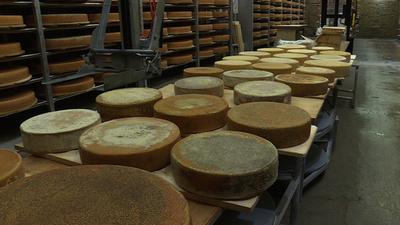 動画:熟成チーズの風味、音楽を聞かせたら変わる? スイスで実験中