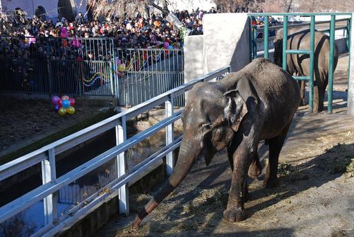 アルメニアの動物園で独身のゾウが花嫁を迎える
